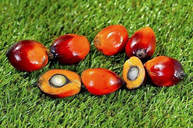 palm yağı görseli