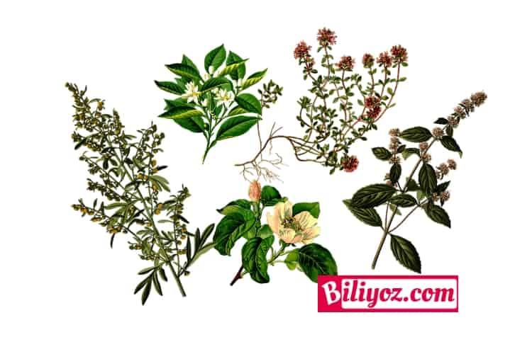 bitkisel-caylar-listesi