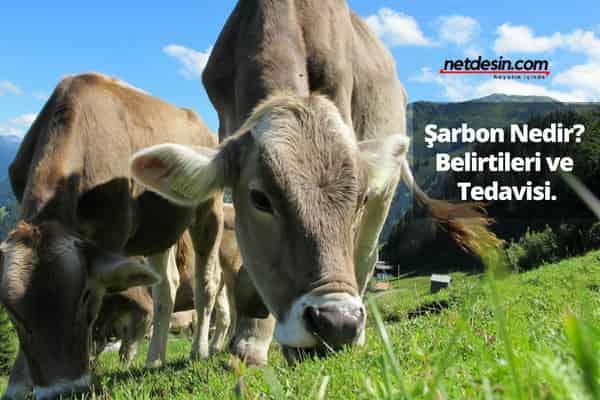 sarbon