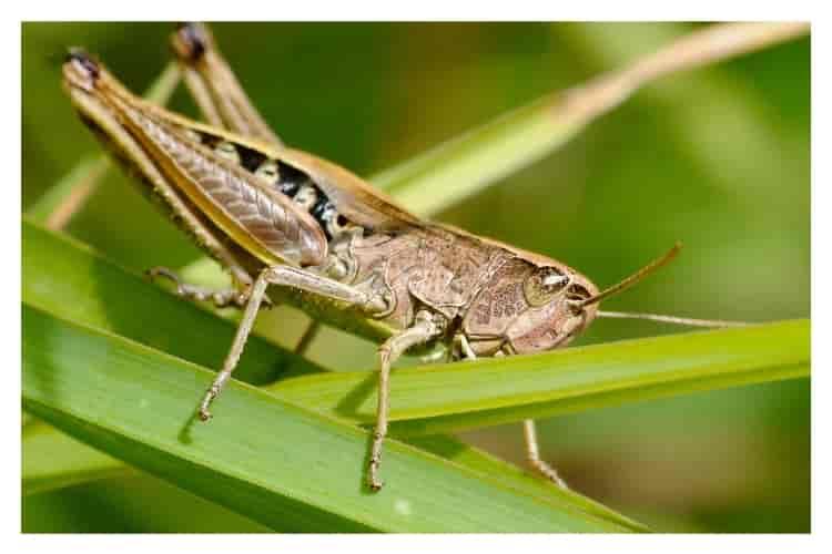 ağız-çalkalama-suyu-böcek-ısırığı