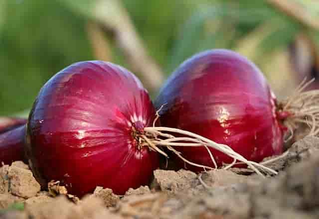 Saç için soğan suyu. Soğan suyunun saça faydaları (6)