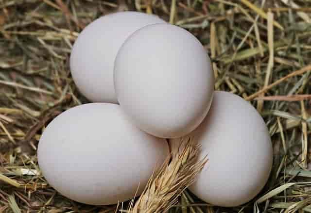 yumurta-tok-tutan-besinler