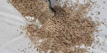 Keten tohumu zayıflamak için nasıl kullanılır