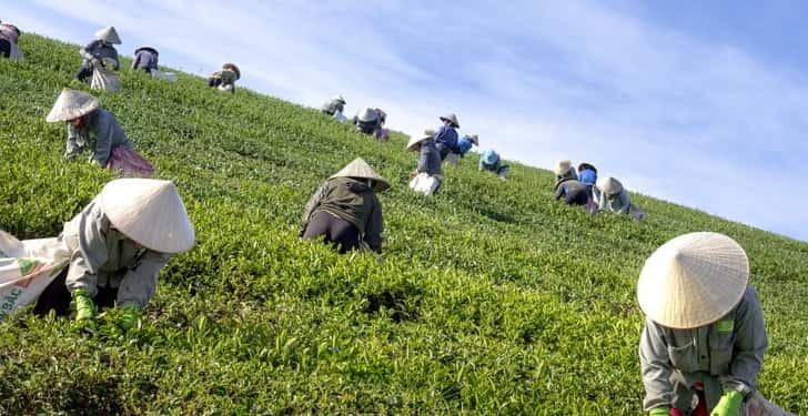 yeşil çay antioksidan