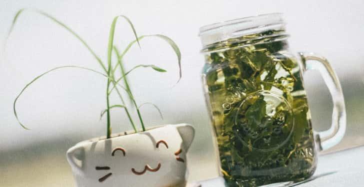 yeşil çay diş eti