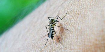 Evde sivrisinek kovucu yapımı