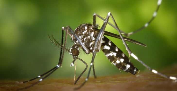 Evde sivrisinek kovucu
