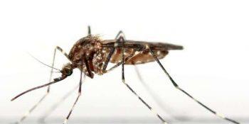 Sivrisinek ısırığına ne iyi gelir doğal yöntemler
