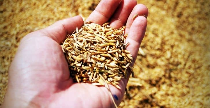 pirinç sütünün faydaları