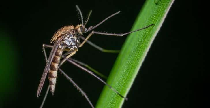 Sıtma belirtileri