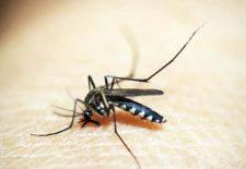 Sıtma nedir-sıtma belirtileri-sıtma tedavisi